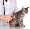 Ветеринарные клиники в Новоржеве